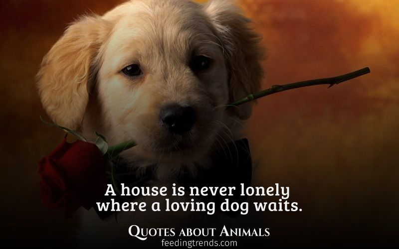 Quotes about Animals and Pets We Love